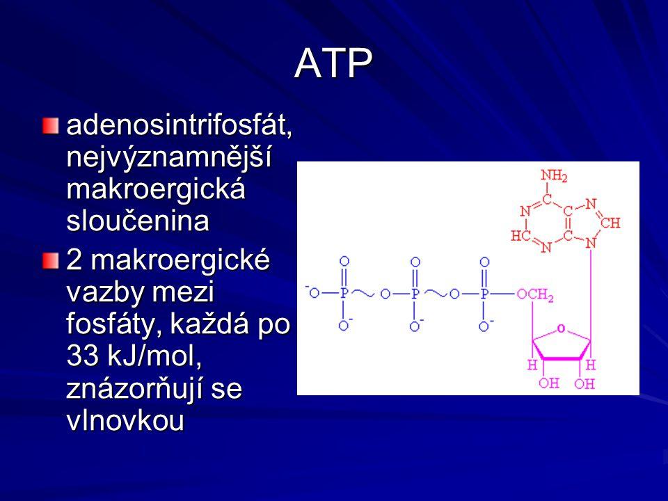 ATP adenosintrifosfát, nejvýznamnější makroergická sloučenina
