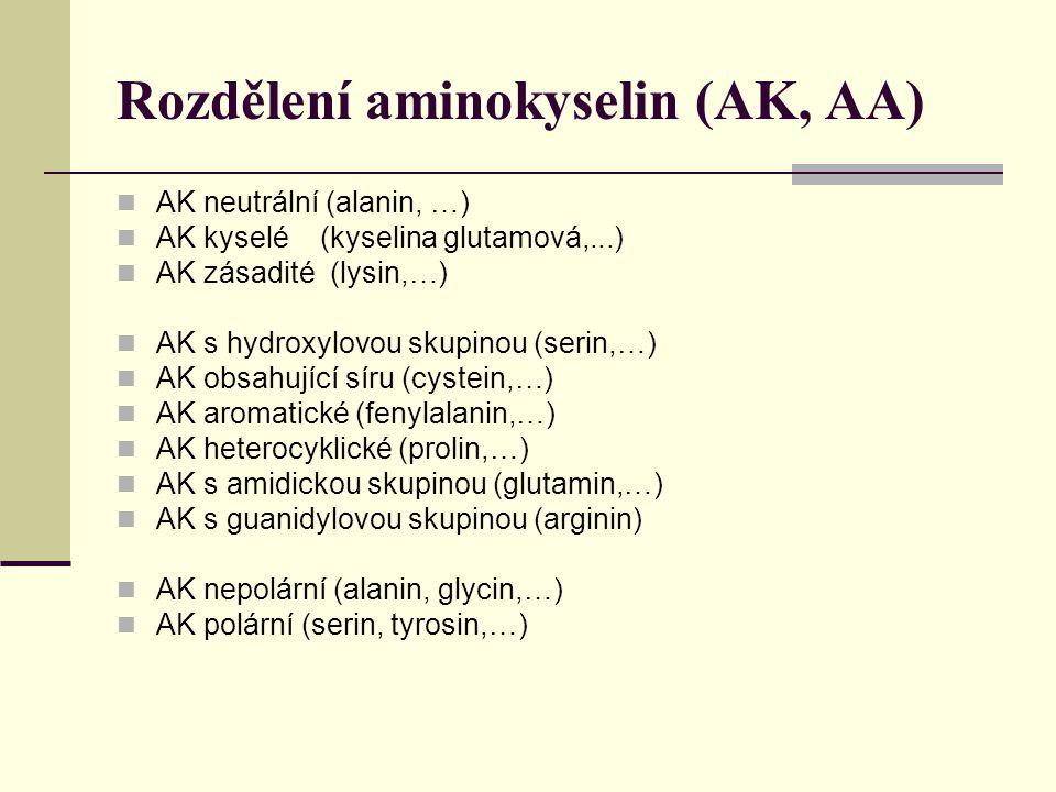 Rozdělení aminokyselin (AK, AA)