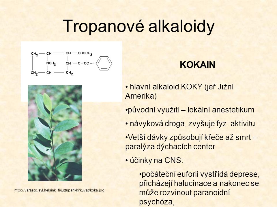 Tropanové alkaloidy KOKAIN hlavní alkaloid KOKY (jeř Jižní Amerika)