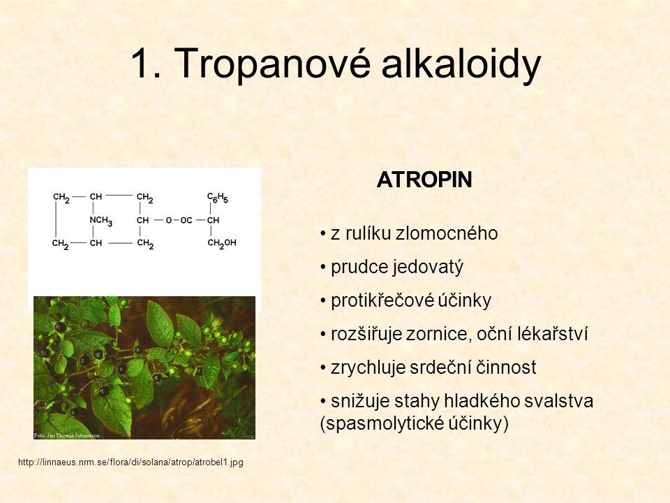 1. Tropanové alkaloidy ATROPIN z rulíku zlomocného prudce jedovatý