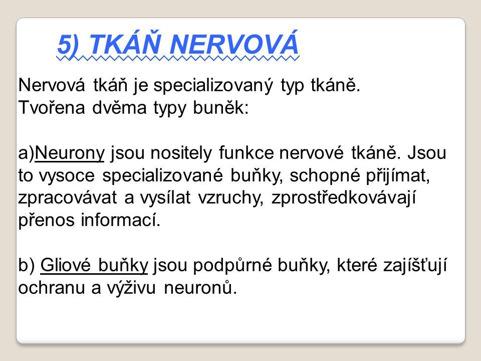 5) Tkáň nervová Nervová tkáň je specializovaný typ tkáně.