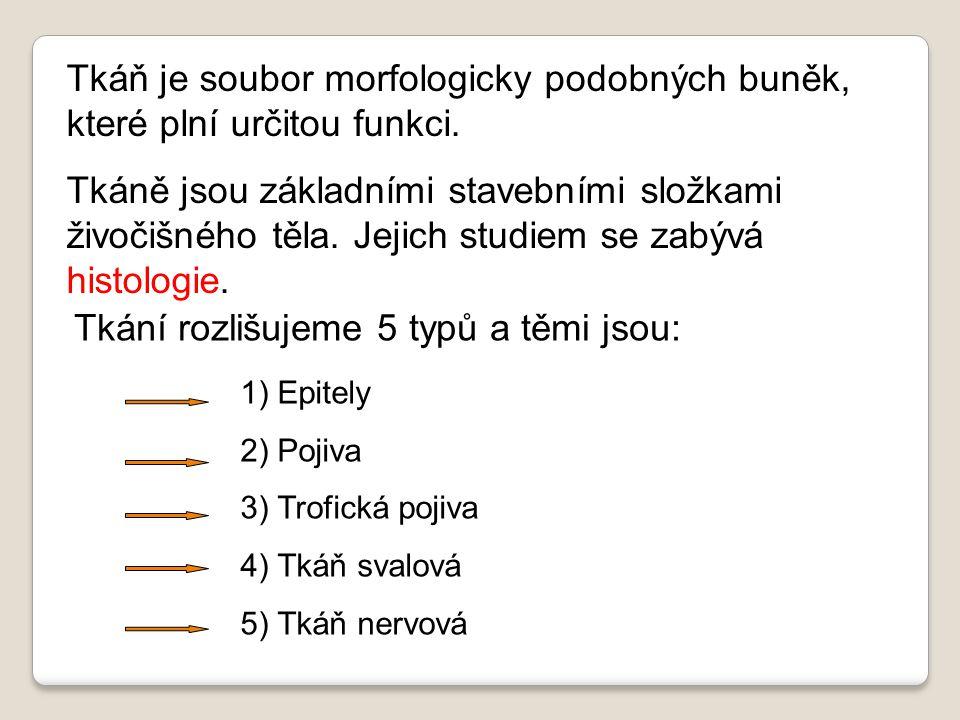 Tkání rozlišujeme 5 typů a těmi jsou: