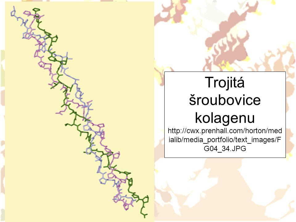 Trojitá šroubovice kolagenu http://cwx. prenhall