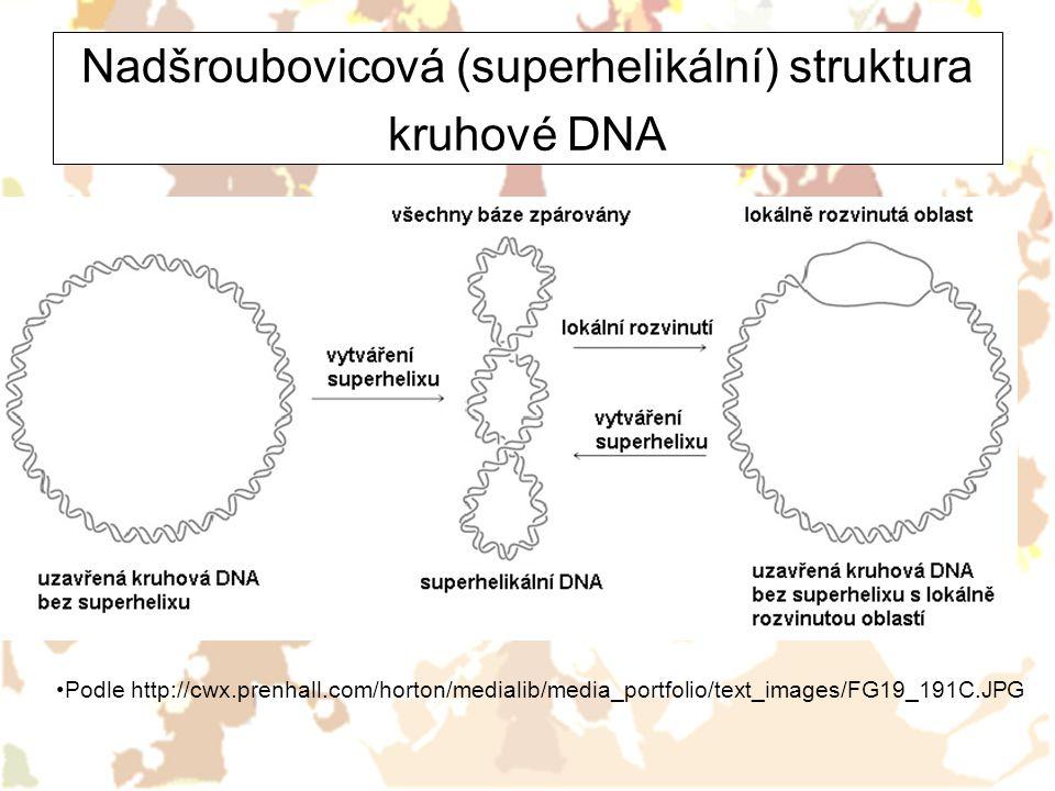 Nadšroubovicová (superhelikální) struktura kruhové DNA