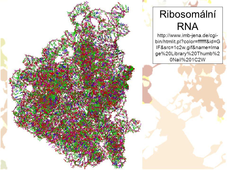Ribosomální RNA http://www. imb-jena. de/cgi-bin/htmlit. pl