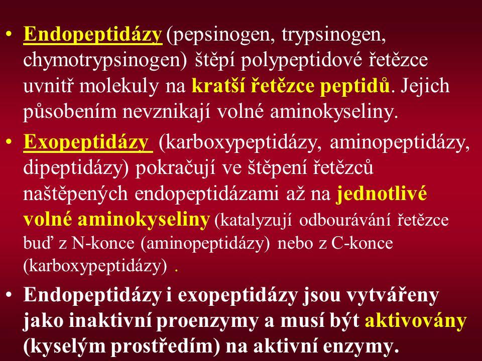 Endopeptidázy (pepsinogen, trypsinogen, chymotrypsinogen) štěpí polypeptidové řetězce uvnitř molekuly na kratší řetězce peptidů. Jejich působením nevznikají volné aminokyseliny.