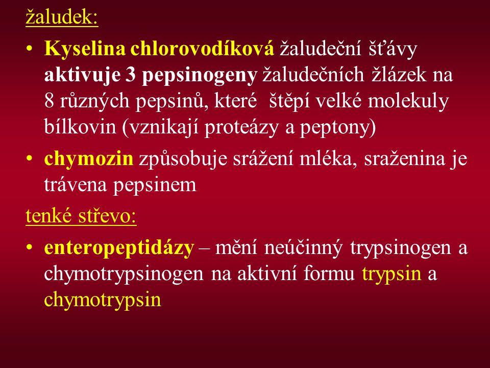 žaludek: