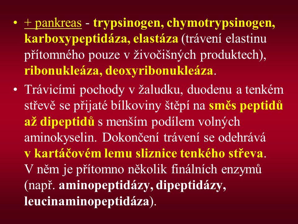+ pankreas - trypsinogen, chymotrypsinogen, karboxypeptidáza, elastáza (trávení elastinu přítomného pouze v živočišných produktech), ribonukleáza, deoxyribonukleáza.