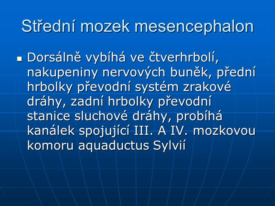 Střední mozek mesencephalon