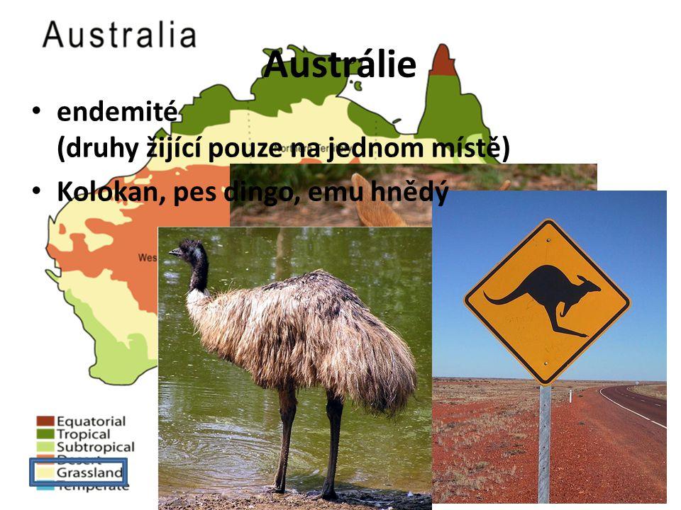 Austrálie endemité (druhy žijící pouze na jednom místě)