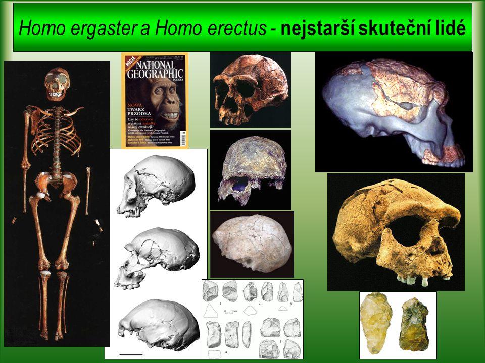 Homo ergaster a Homo erectus - nejstarší skuteční lidé