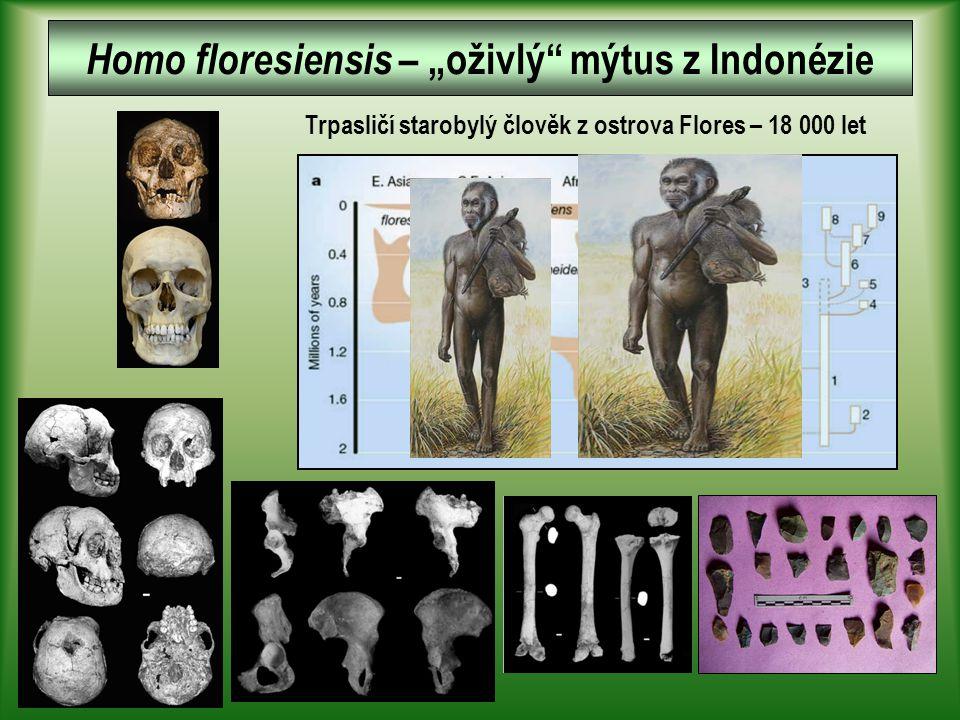 """Homo floresiensis – """"oživlý mýtus z Indonézie"""