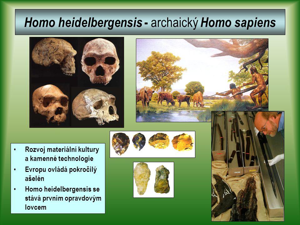 Homo heidelbergensis - archaický Homo sapiens