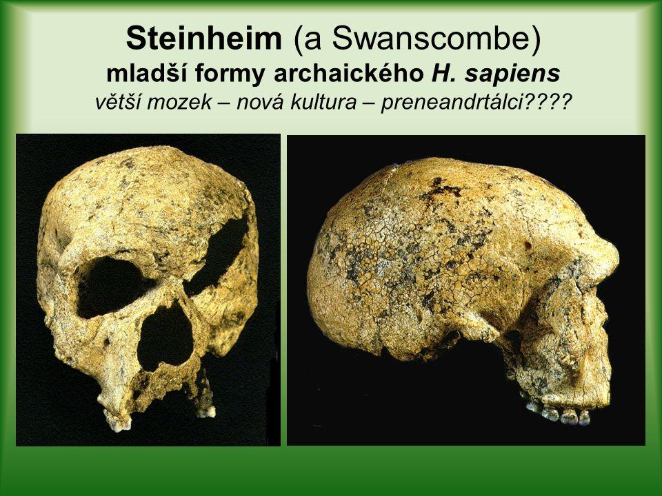 Steinheim (a Swanscombe) mladší formy archaického H