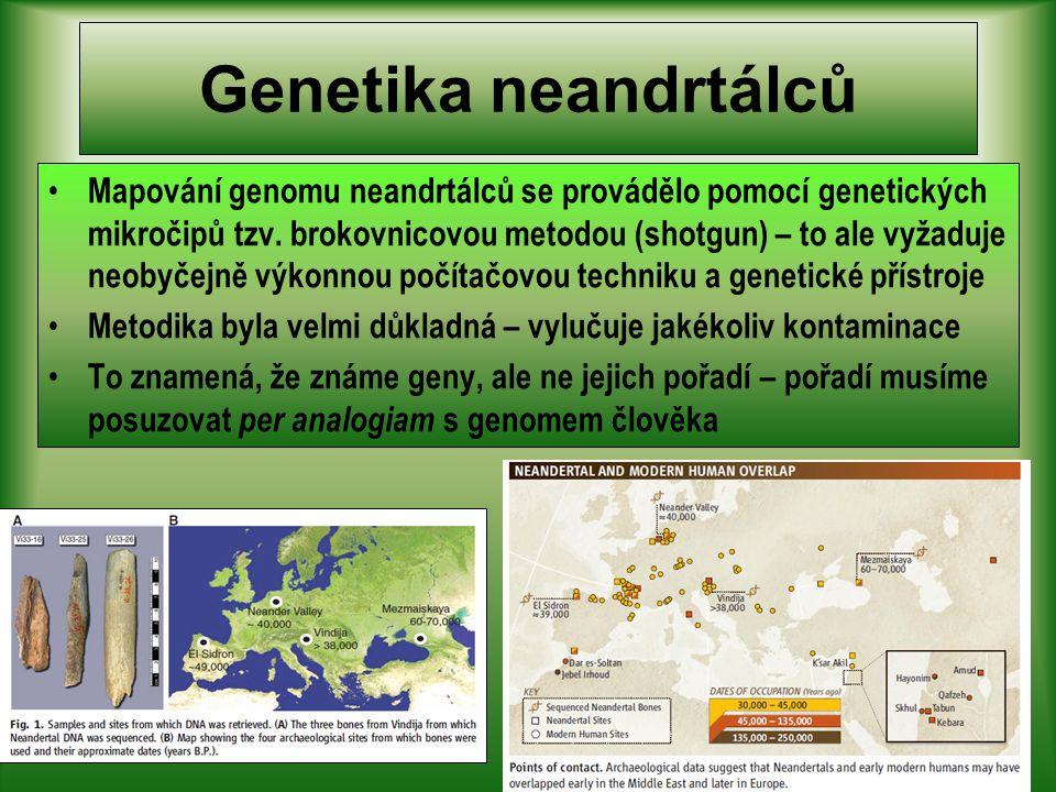 Genetika neandrtálců