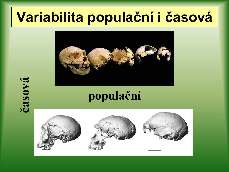 Variabilita populační i časová
