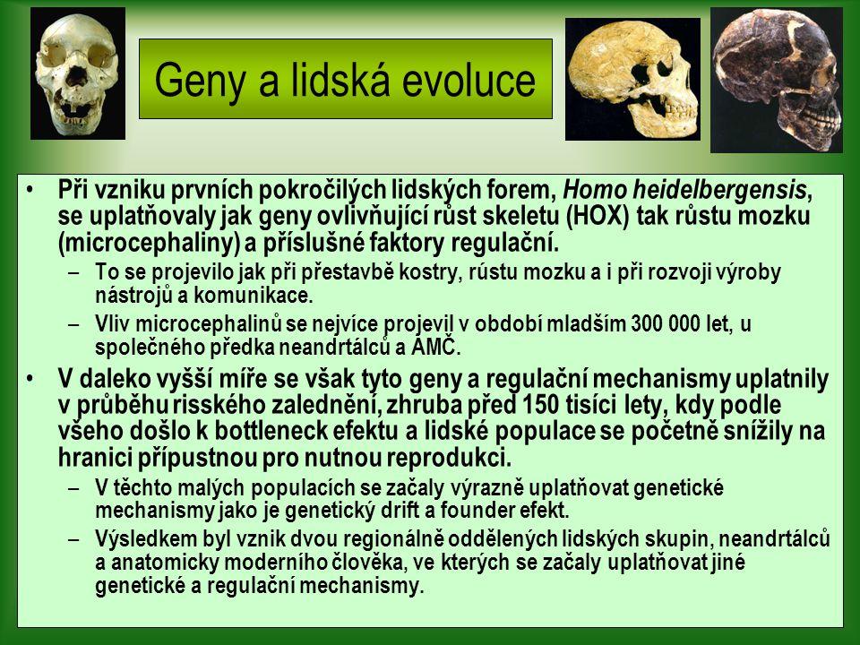 Geny a lidská evoluce