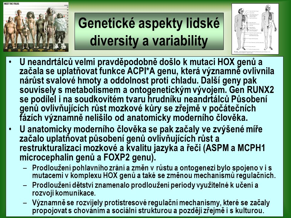 Genetické aspekty lidské diversity a variability