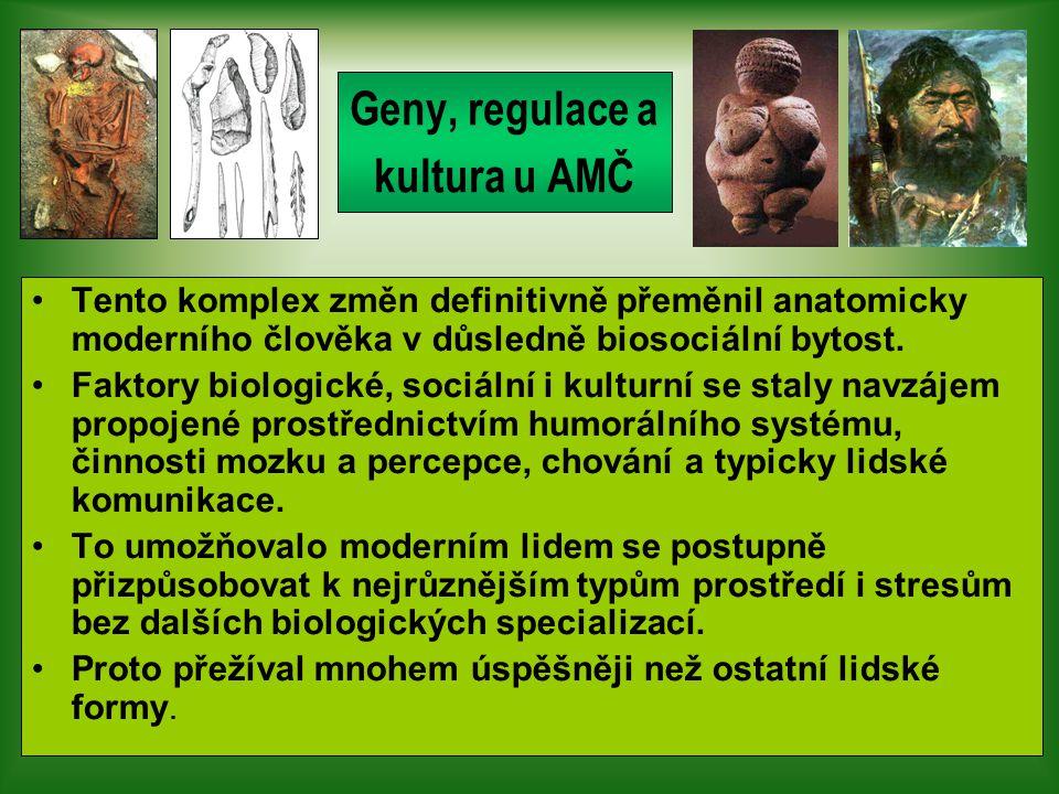 Geny, regulace a kultura u AMČ