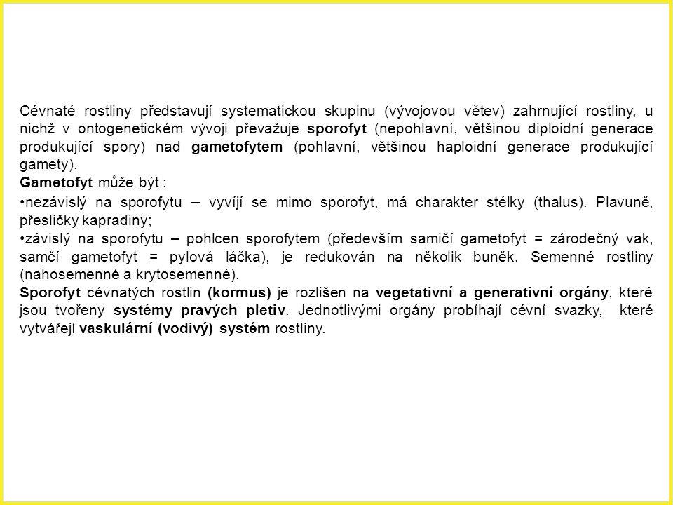 Charakteristika cévnatých rostlin (Tracheophytae)