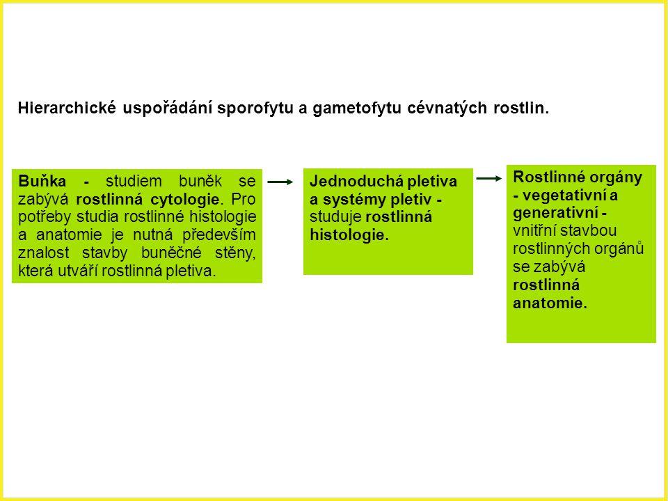 Hierarchické uspořádání sporofytu a gametofytu cévnatých rostlin.