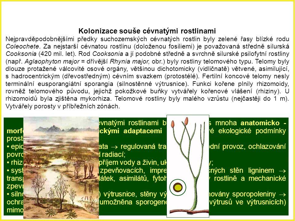Kolonizace souše cévnatými rostlinami