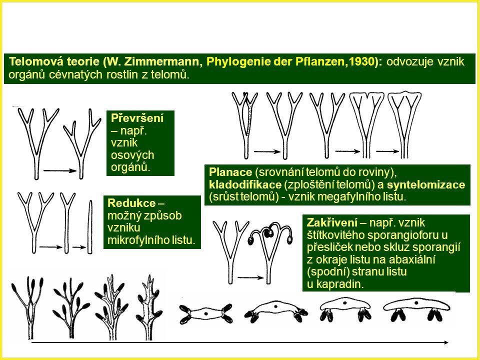Telomová teorie (W. Zimmermann, Phylogenie der Pflanzen,1930): odvozuje vznik orgánů cévnatých rostlin z telomů.