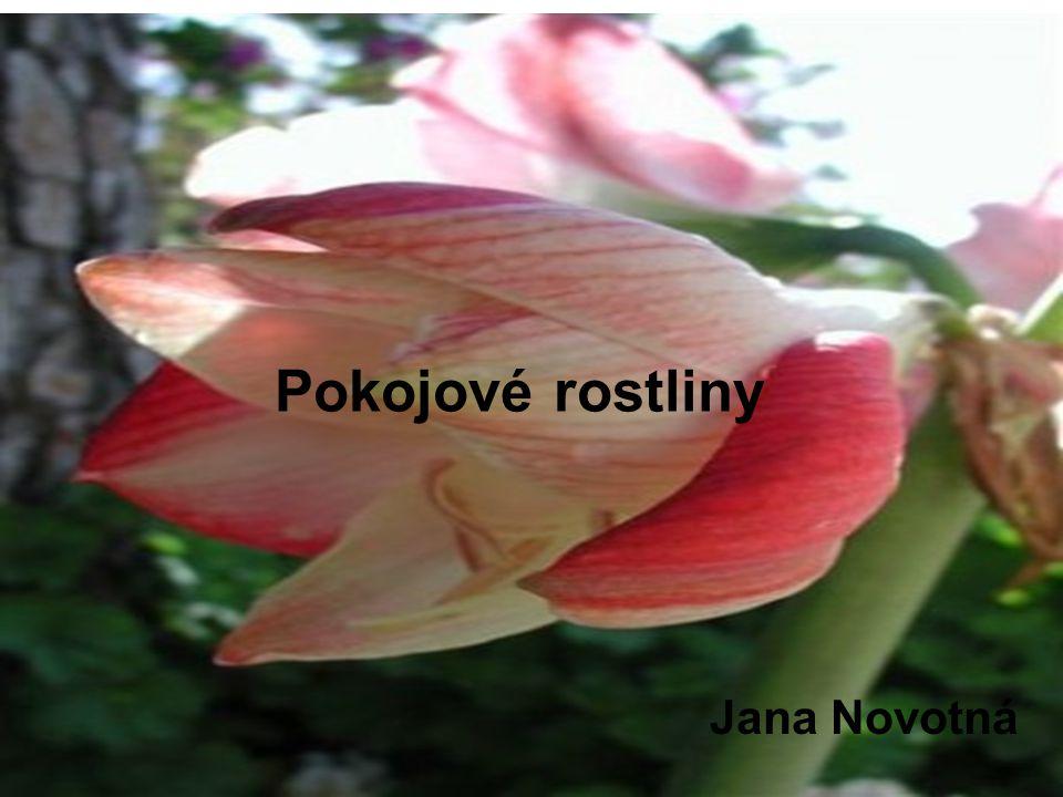 Pokojové rostliny Pokojové rostliny Jana Novotná