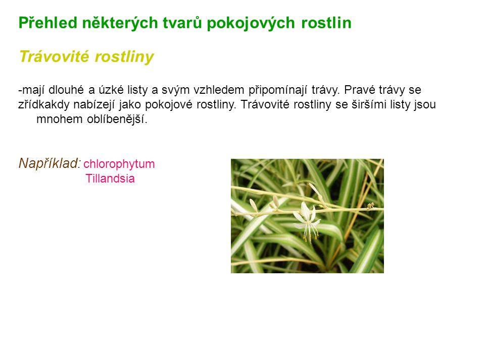 Přehled některých tvarů pokojových rostlin Trávovité rostliny