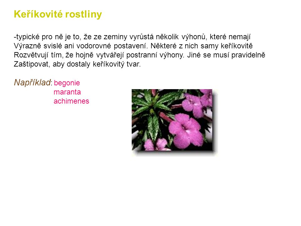 Keříkovité rostliny Například: begonie