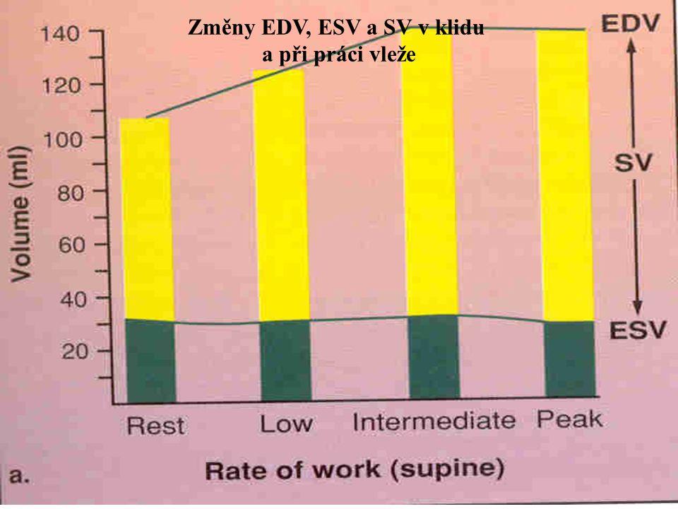 Změny EDV, ESV a SV v klidu