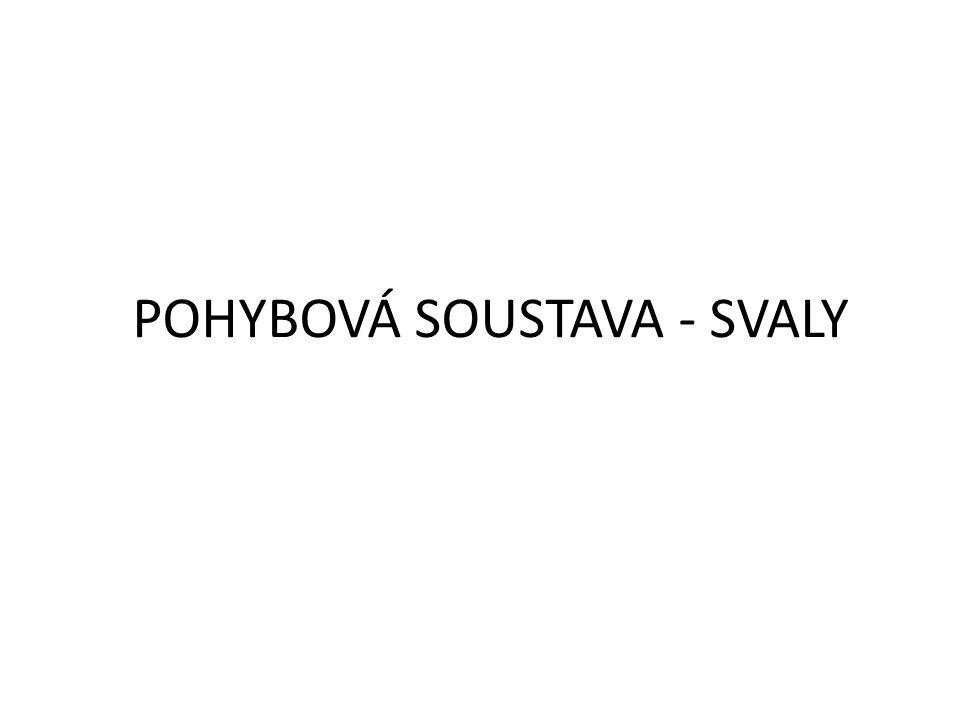 POHYBOVÁ SOUSTAVA - SVALY