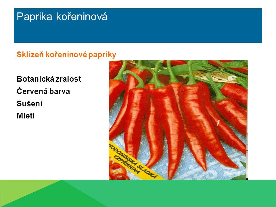 Paprika kořeninová Sklizeň kořeninové papriky Botanická zralost