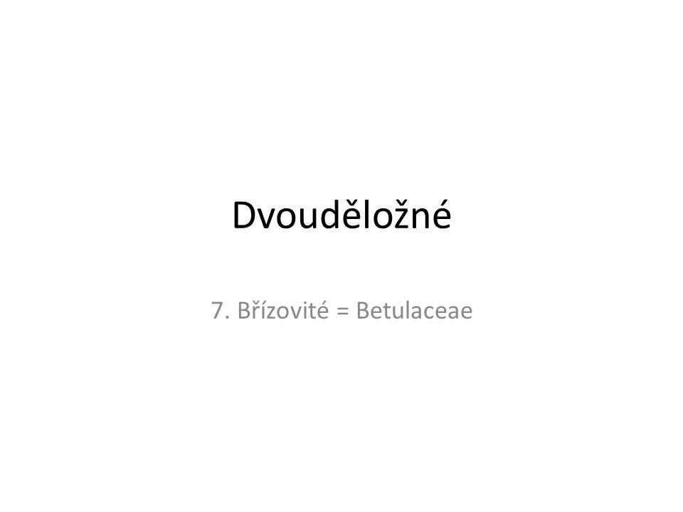 7. Břízovité = Betulaceae