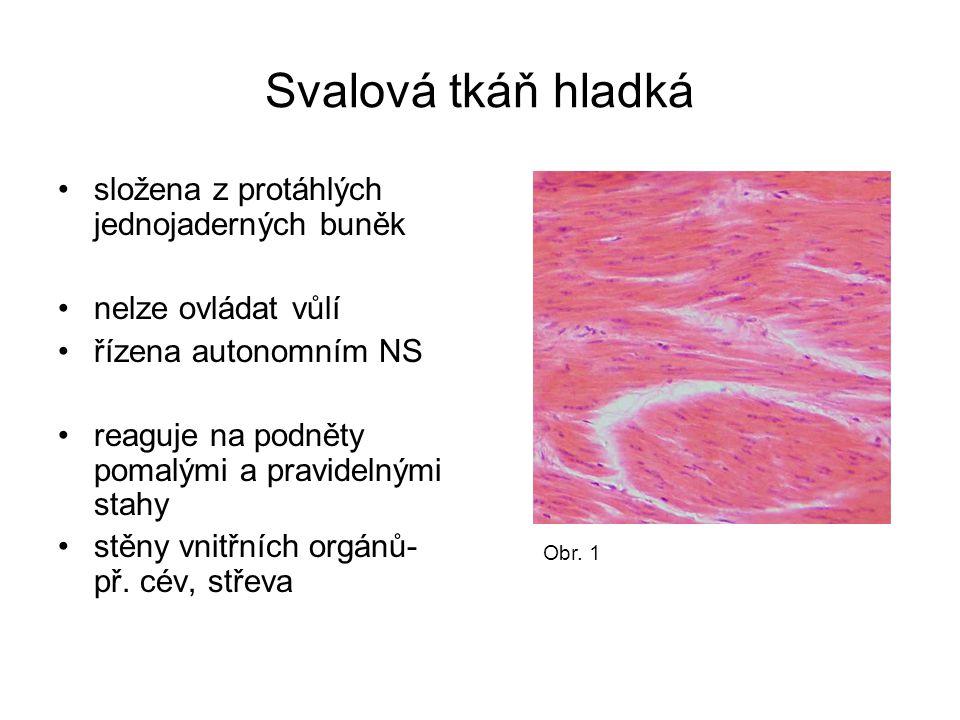 Svalová tkáň hladká složena z protáhlých jednojaderných buněk