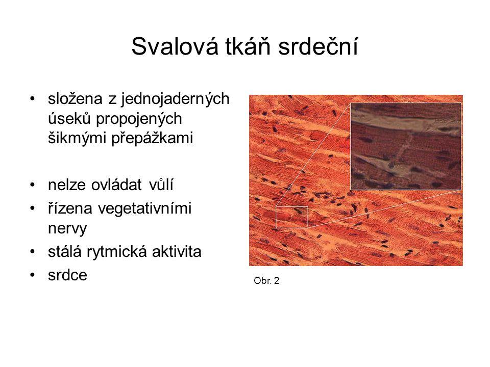 Svalová tkáň srdeční složena z jednojaderných úseků propojených šikmými přepážkami. nelze ovládat vůlí.