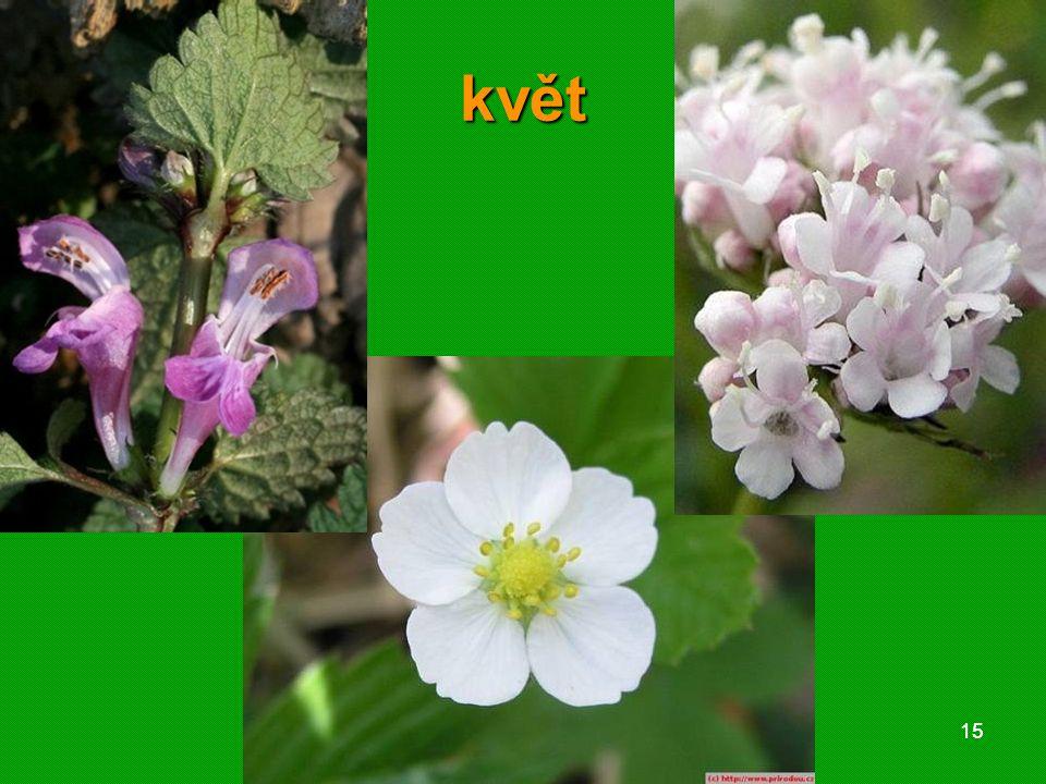 květ 01 krytosemenné rostliny - systém