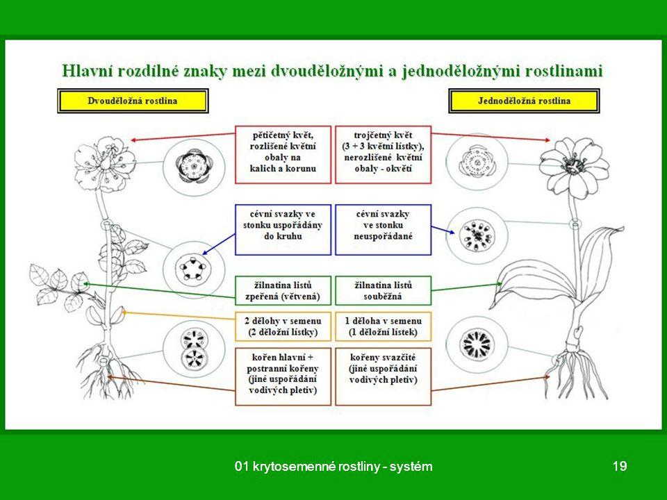 01 krytosemenné rostliny - systém 01 krytosemenné rostliny - systém 19
