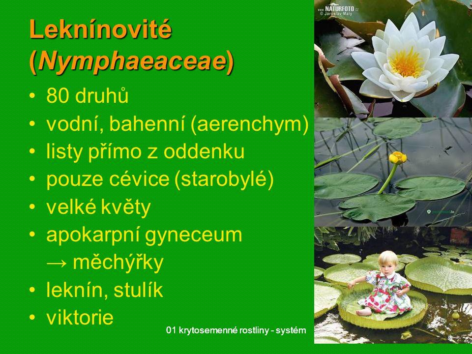 Leknínovité (Nymphaeaceae)