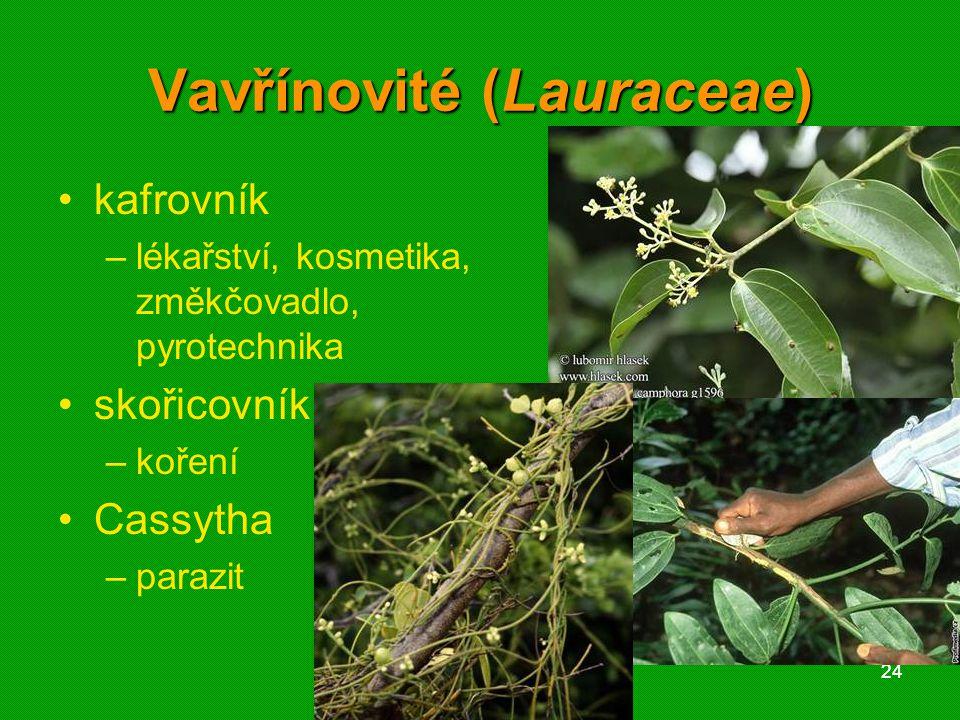 Vavřínovité (Lauraceae)