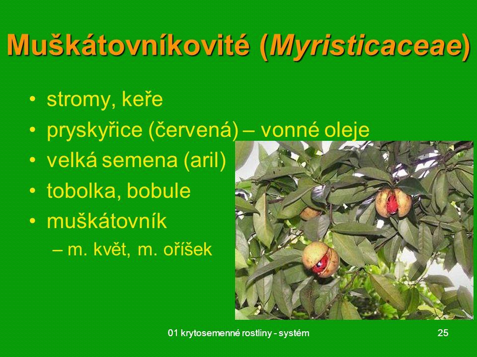 Muškátovníkovité (Myristicaceae)