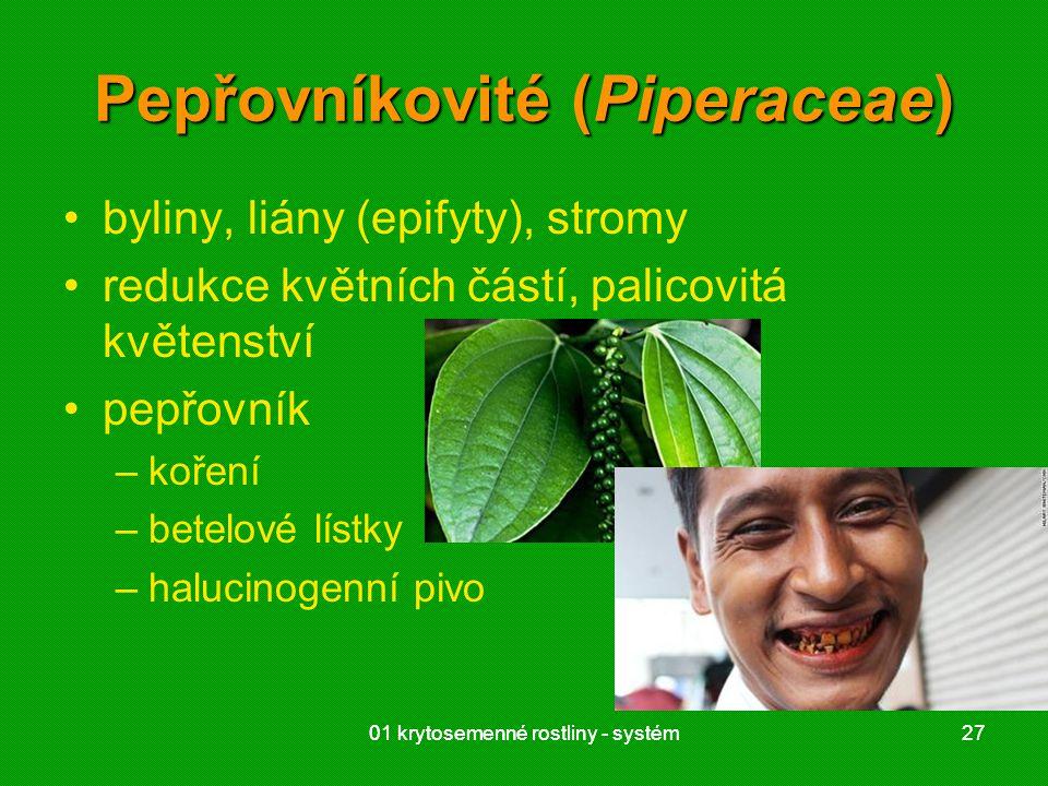 Pepřovníkovité (Piperaceae)