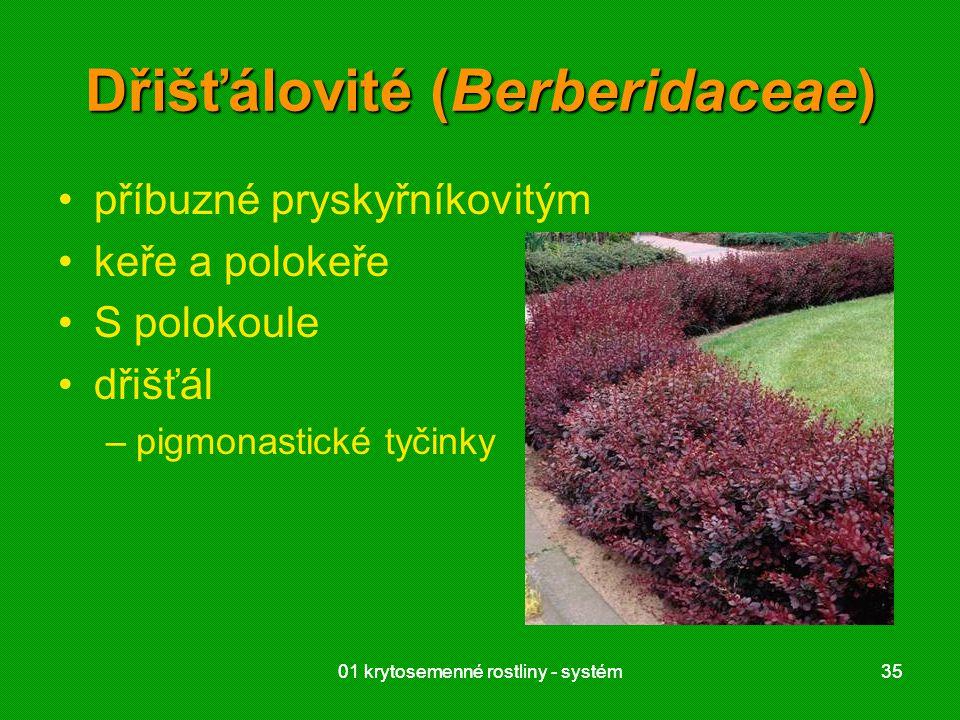 Dřišťálovité (Berberidaceae)