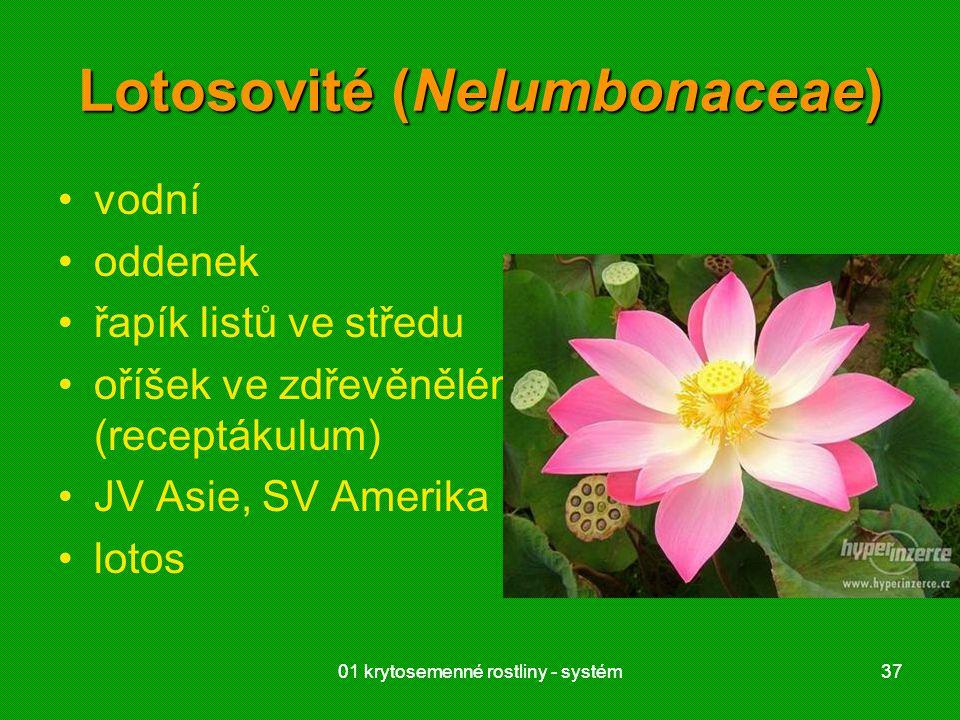 Lotosovité (Nelumbonaceae)