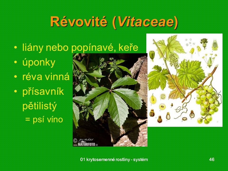 Révovité (Vitaceae) liány nebo popínavé, keře úponky réva vinná