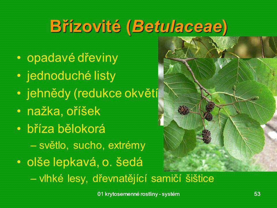 Břízovité (Betulaceae)