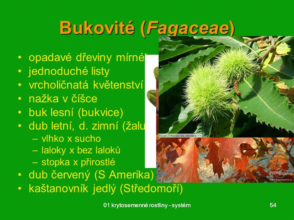 Bukovité (Fagaceae) opadavé dřeviny mírného pásu jednoduché listy