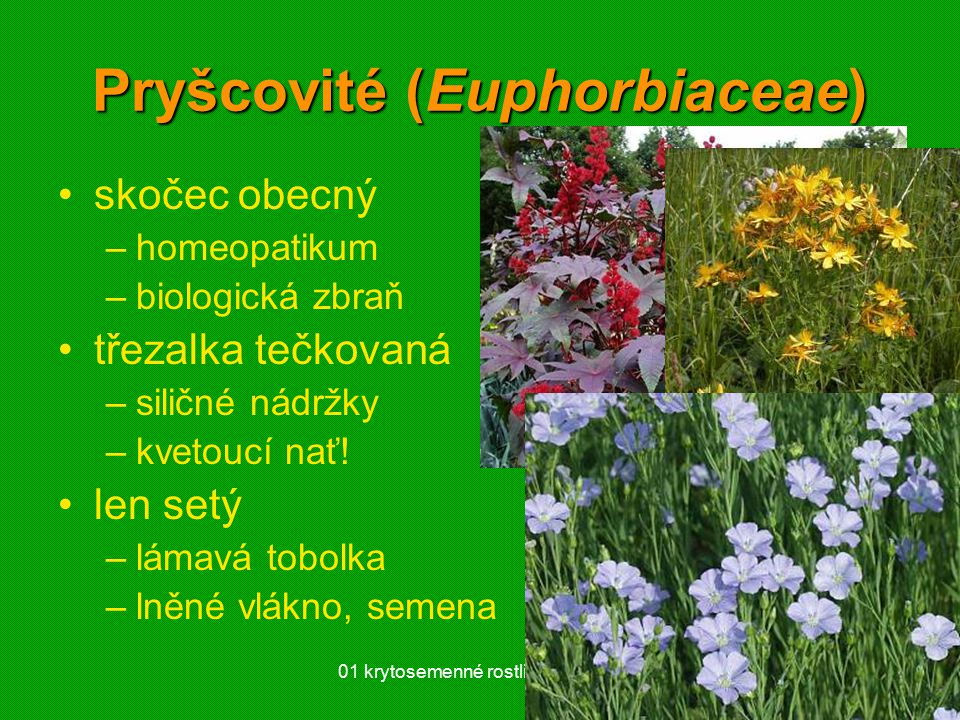 Pryšcovité (Euphorbiaceae)