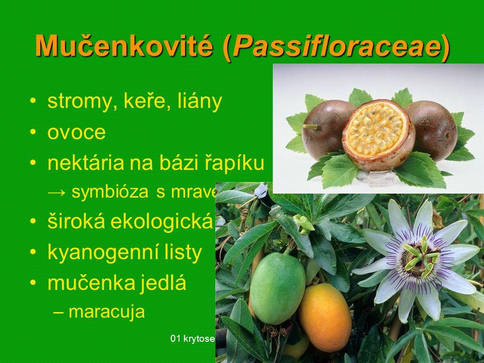 Mučenkovité (Passifloraceae)