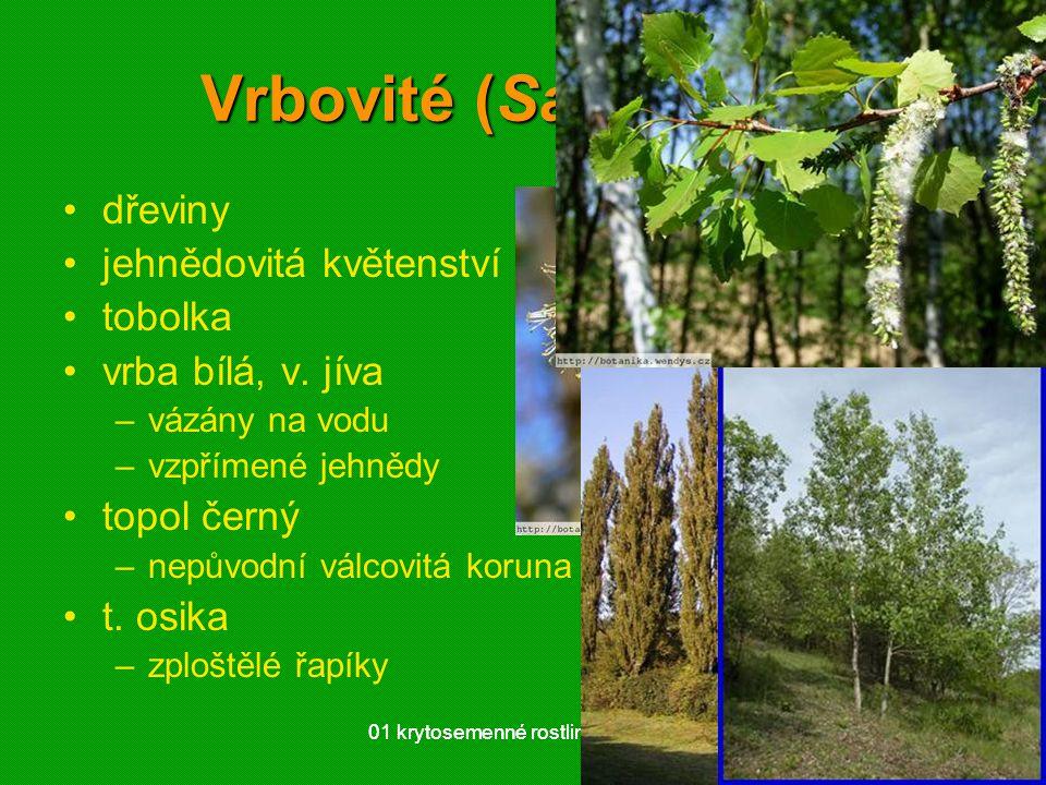 Vrbovité (Salicaceae)